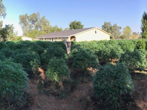 DEA agents raid multiple marijuana grow sites in Antelope Valley; thousands of plants seized