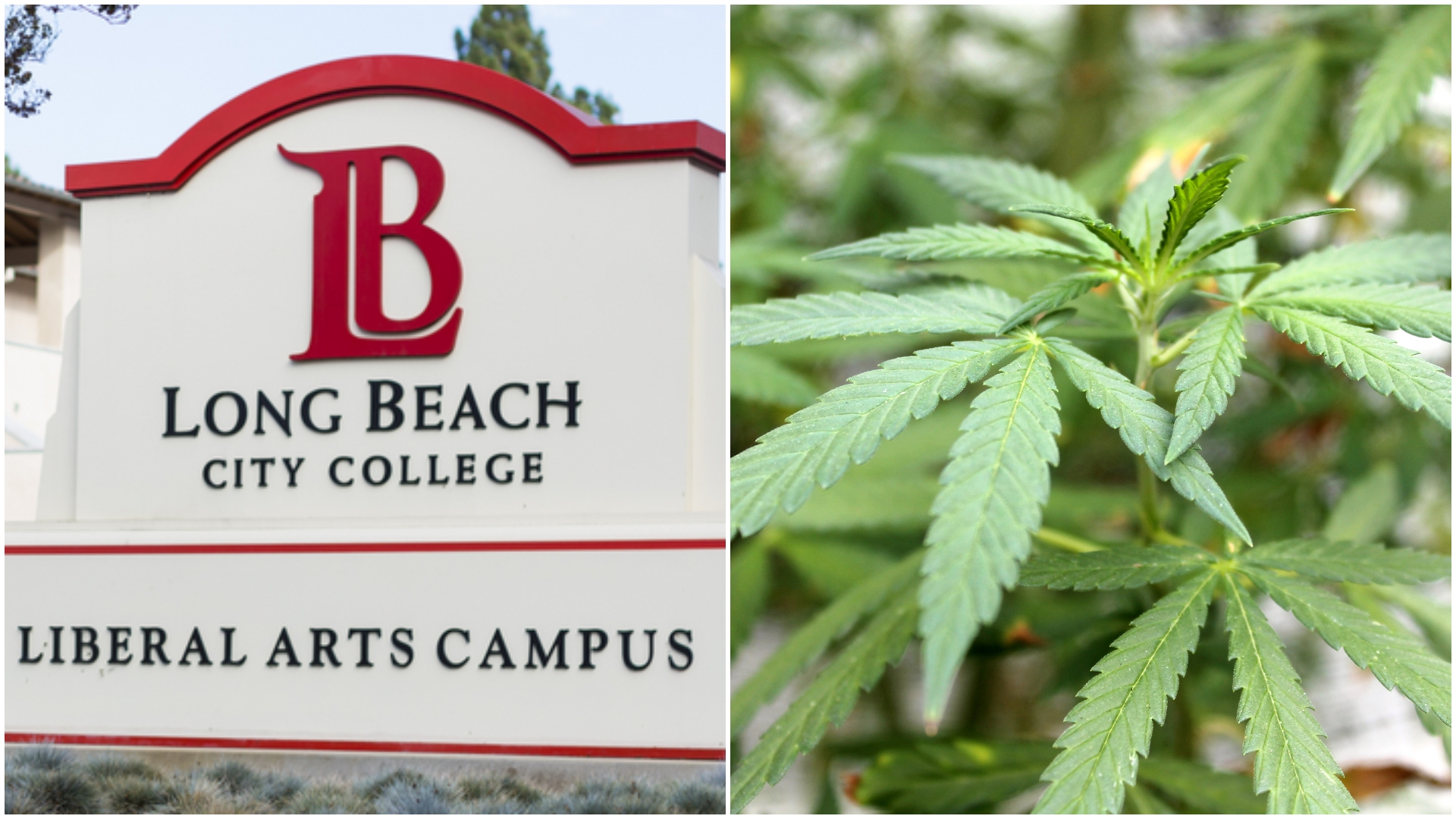 Long Beach City College to offer 1st cannabis industry class in school's history