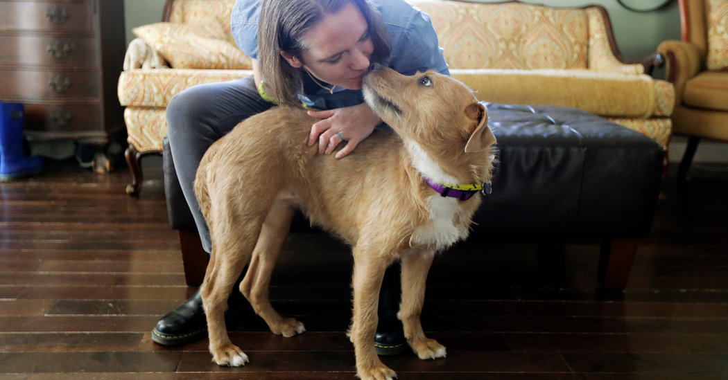 Los Angeles Animal Services Says People Can Help by Sharing Their Pet Stories