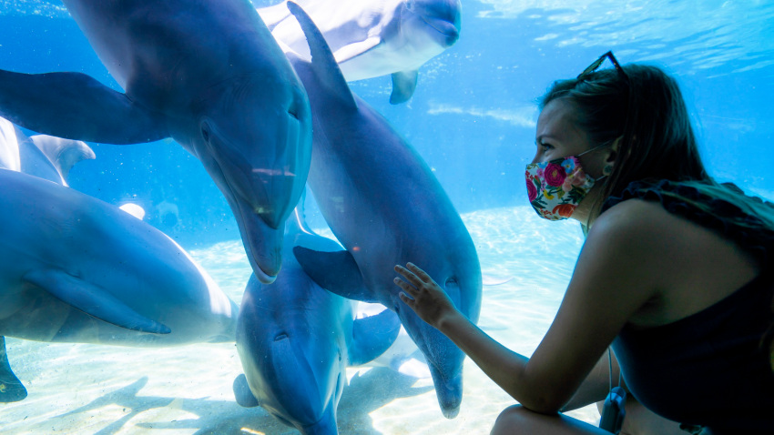 SeaWorld Presents New Outdoor Experience as It Preps for Partial Reopening