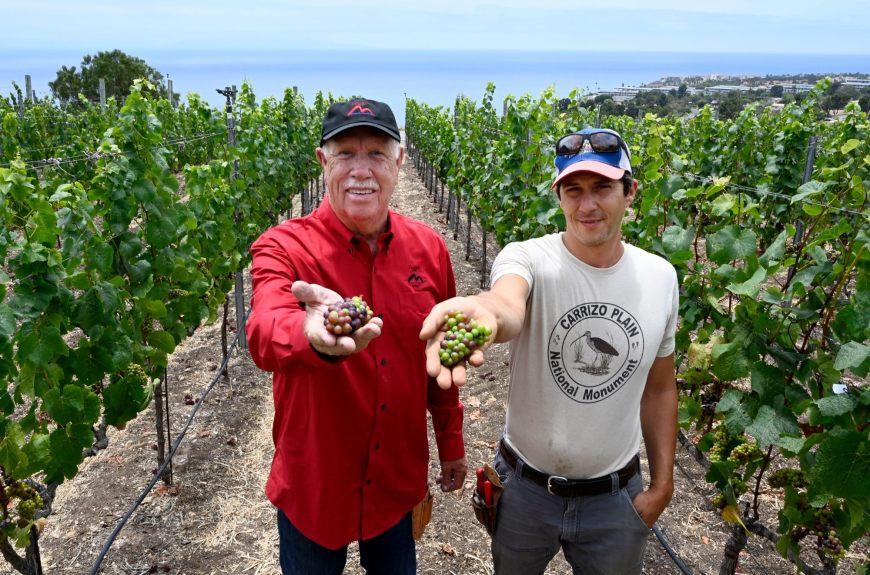 Palos Verdes Peninsula designated an official wine-growing region