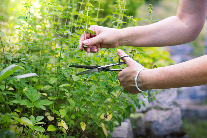 4 things to do to get the most out of your late summer garden